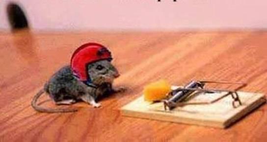 mouse-helmet-trap.jpg